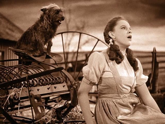 Judy-Garland-and-Toto-in-The-Wizard-of-Oz1