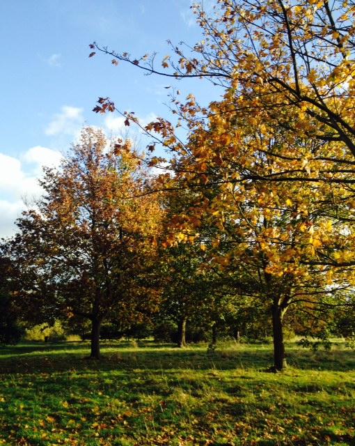 Autumn in Osterley